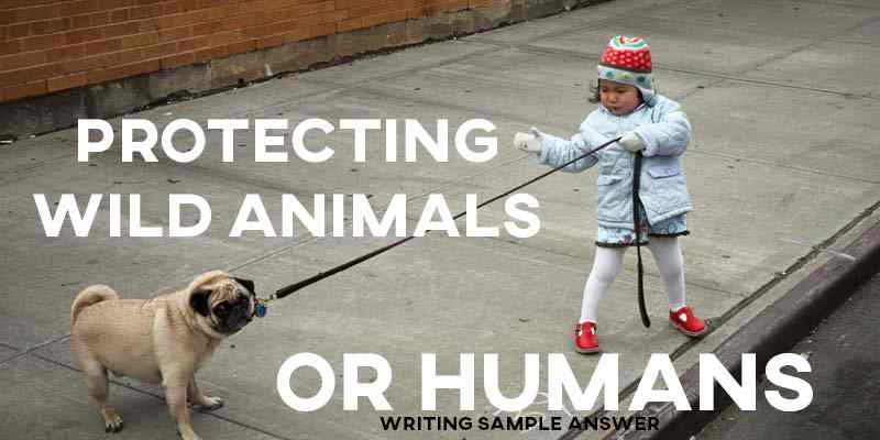 IELTS Writing Task 2 Sample Answer Essay: Protecting Wild Animals or Humans (Real Past IELTS Exam)