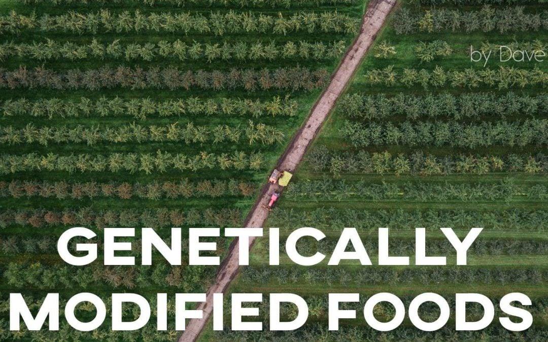IELTS Essay: Genetically Modified Foods