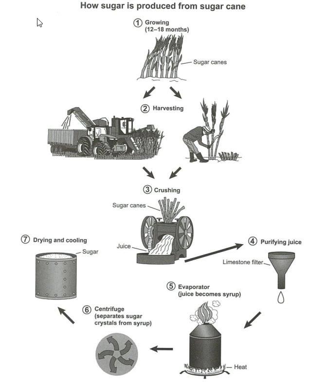 IELTS Cambridge 16 Essay Task 1: Sugar Cane
